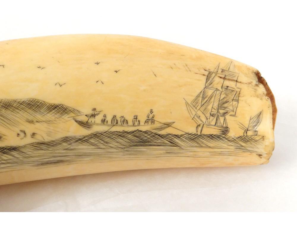 scrimshaw dent morse cachalot ivoire grav p che baleines voiliers xix me. Black Bedroom Furniture Sets. Home Design Ideas