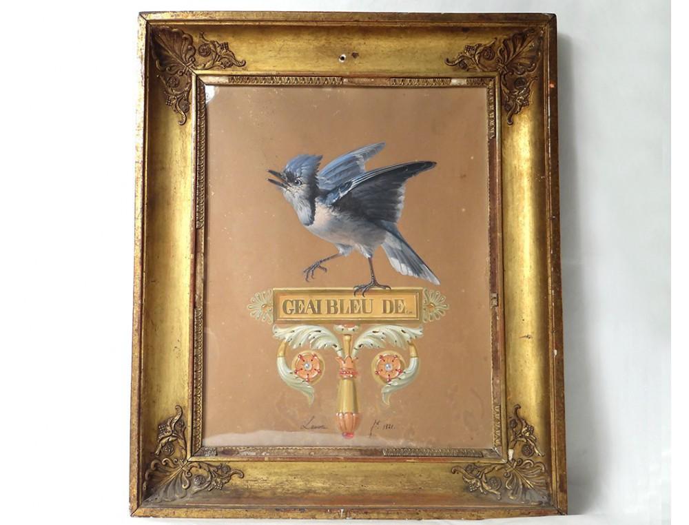 tableau gouache geai bleu de cayenne lamotte oiseau cadre. Black Bedroom Furniture Sets. Home Design Ideas